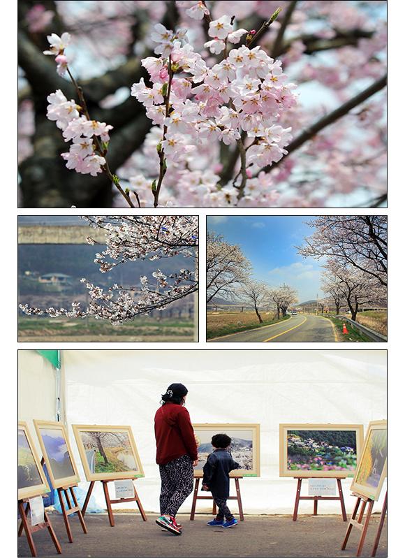 천안 북면위례벚꽃축제